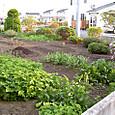 120520 菜園全体その1